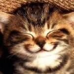 Smile-gato